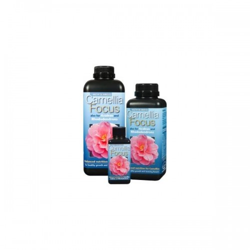 Camelia Focus 300Ml - Growth Technology