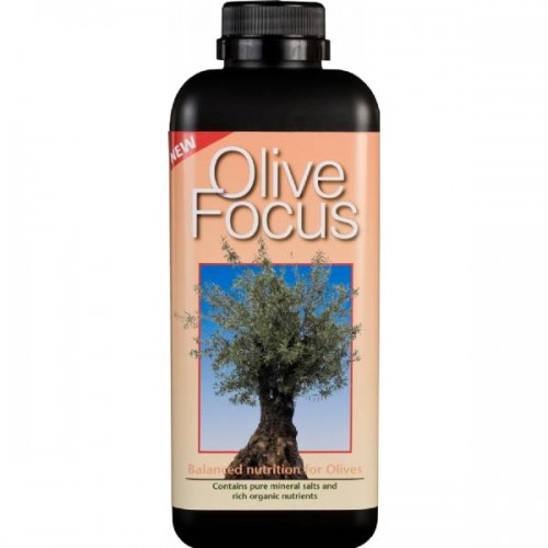 Olive Focus 300Ml - Growth Technology