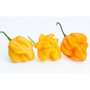 Semi Di Peperoncino Papa Joe's Scotch Bonnet Semi Di Peperoncino